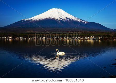 White Swan On Yamanaka Lake