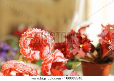Amazing flowers in shop on blurred background