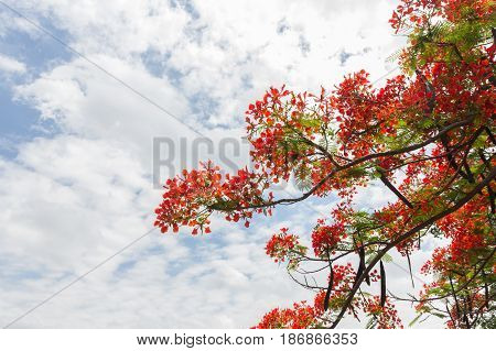 Guppy flower and green leaf on with sky background