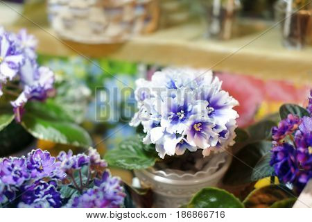 White flower pot with plant in shop on blurred background