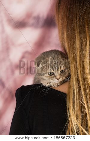 Domestic cat kitten pet feline cute mammal animal