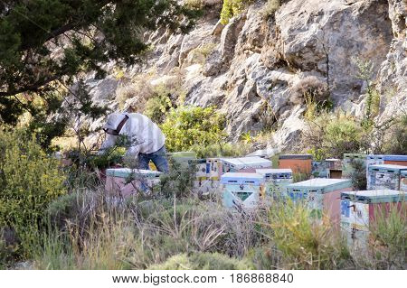 Beekeeper in the middle of its hives in the mountains of Crete