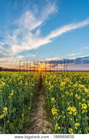 Photo Of Rapeseed Field With Sunset And Dramatic Clouds