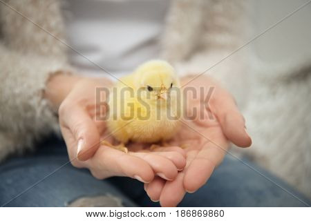 Woman with cute funny chicken, closeup