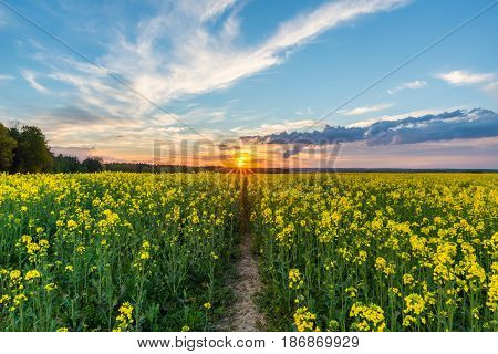 Photo Of Rapeseed Field With Sunset And Dramatic Cloudscape