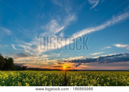 Photo Of Rapeseed Field With Sunset And Nice Cloudscape