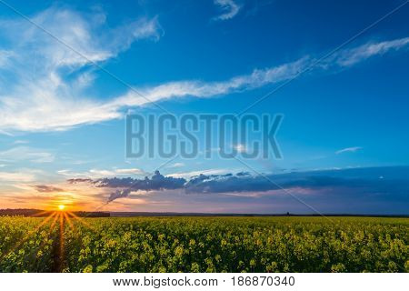 View Over Rapeseed Field With Yellow Blooms On Sunset And Storm Cloud