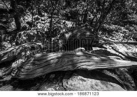 Felled trees. Samaria Gorge. Island of Crete. Greece. Black and white.