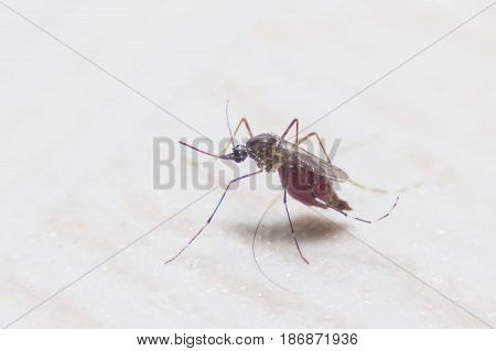mosquito dangerous vehicle and other infections. background