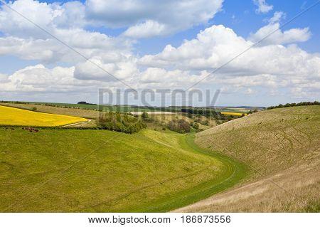 Grazing Pastures In Springtime