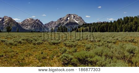 Open range with trees and the Grand Teton mountain range