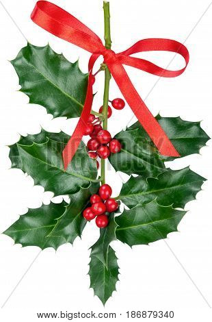 Christmas holly ribbon christmas holly holly branch holly sprig ilex