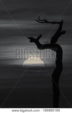 Nightscape Landscape Graphic Illustration