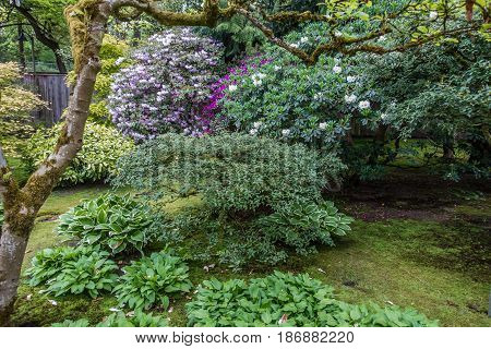 A veiw of plants and flowers in a Seattel garden.