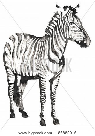 black and white painting with water and ink zebra illustration