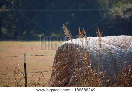 Haystacks, East Texas Gold, hayfield, Gladewater, rolls