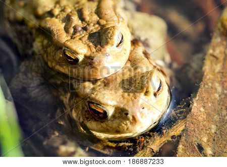 a Toad before the hike, nature, animals