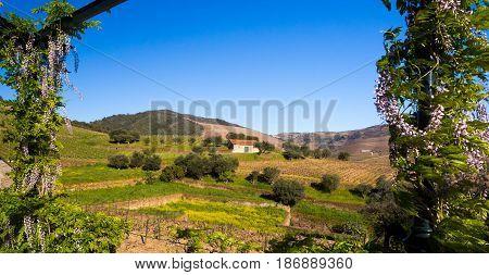 Landscape in Vale do Douro in Portugal.