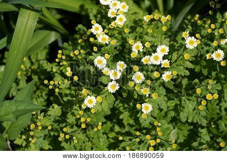 Yellow spring flowers with white petals and a yellow core