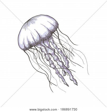 Hand drawn sketch isolated jellyfish, marine animals - Stock Vector illustration