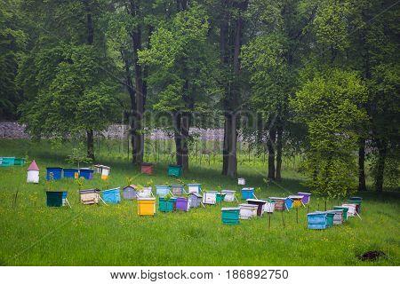 Bees. Beekeepers working in apiary. Beehive honey