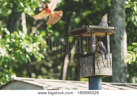 Birds Feeding at Bird Feeder In The Spring