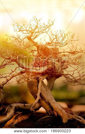 Beautiful bonsai tree photographed in close up
