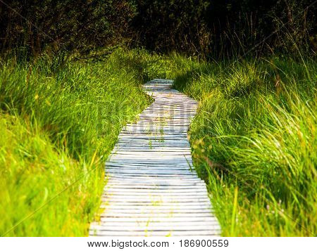 Narrow wooden hiking trail in the grass of peat bog area, Georgenfelder Hochmoor, Germany.
