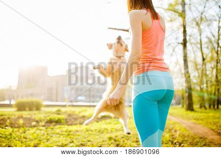 Woman with labrador dog playing with stick on spring lawn