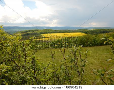 Countryside Landscape With Canola Oil Field