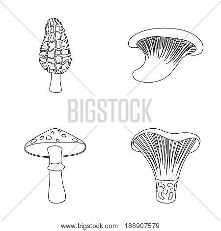 Morel, oyster, green amanita, actariu , indigo. set collection icons in outline style vector symbol stock illustration .