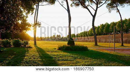 photo taken into the sunset with trees casting shadows