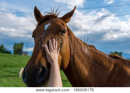 The hand of a woman is stroking a horse at sunset