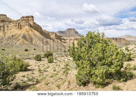 Book Cliffs - desert landscape of eastern Utah with a cliff, buttes and junipers