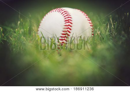 Baseball in the outfield grass.