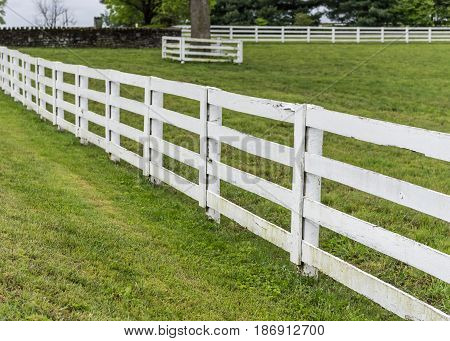White Horse Fence in Kentucky in summer