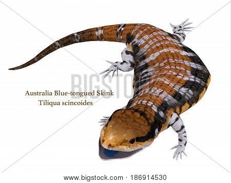 Australia Blue-tongued Skink with Font 3d illustration - The Australia Blue-tongued Skink is a large terrestrial lizard that is active during the day and omnivorous.