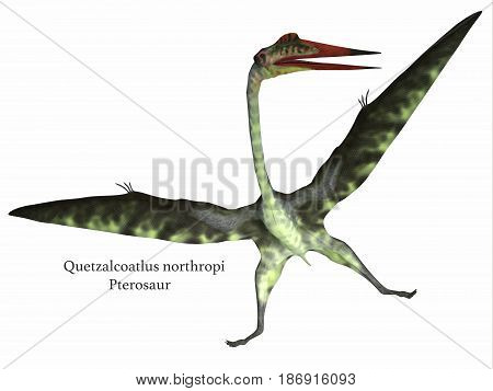 Quetzalcoatlus Reptile on White with Font 3d illustration - Quetzalcoatlus was a carnivorous pterosaur reptile that lived in the Cretaceous Period of North America.