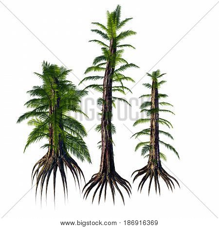 Tempskya sp Trees 3d illustration - Tempskya is an extinct genus of tree-like fern that lived during the Cretaceous Period.