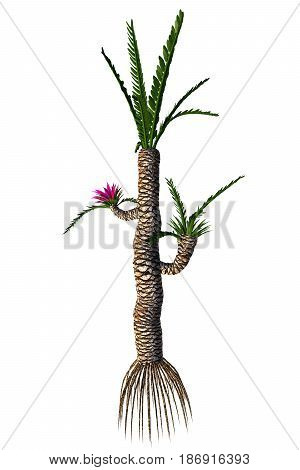 Williamsonia gigas Tree 3d illustration - Williamsonia resembled a shrub or tree that lived in the Jurassic to the Cretaceous Periods.