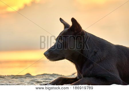 Dog Lies On The Beach At Sunset
