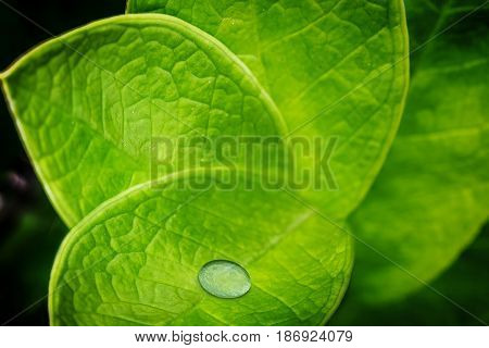 Abstract Of Leave Natural Background