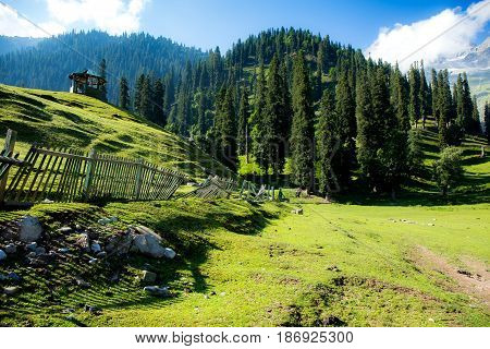 The view of countryside between the forest in Sonamarg Jammu and Kashmir state India.