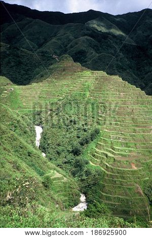 Rice is cultivated in the ancient rice terraces, carved into the mountains, near the city of Banaue, Ifugao Province, in the Philippines.