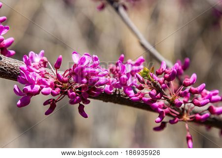 Flowers On A Branch Of A Judaic Tree