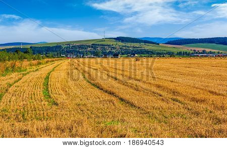 agricultural hay field in mountains. trees behind the grassy meadow. beautiful rural landscape
