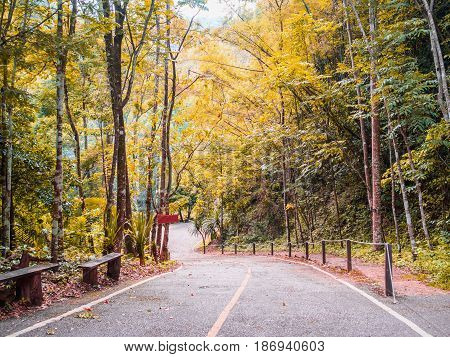 Road into the forest trekking trail with sunlight shinning through top of the trees yellow and green leaves during the spring time.