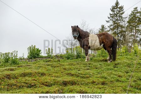 Beatiful pony horse on the green meadow.