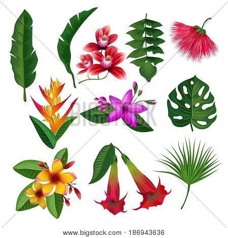 Tropical plants hawaii flowers leaves and branches. Vector illustration isolate on white background. Color blossom flower and green flower plants