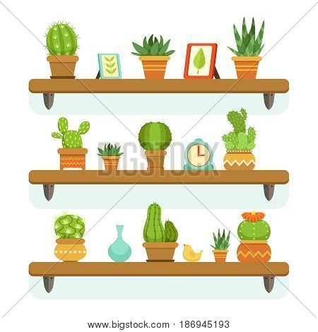Cactuses in pots stand on the shelves. Decorative plants set isolate on white background. Vector illustrations set. Cactus flower on wooden shelf, natural tropical cactus in pot